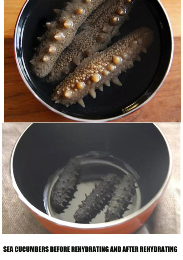 sea cucumbers before Rehydrating and after Rehydrating